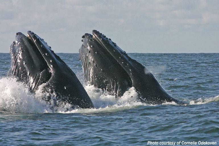 L'administration Obama félicite le Gabon pour la création des parcs marins