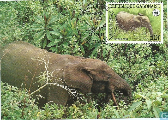 Un braconnier «abattu» par un éléphant