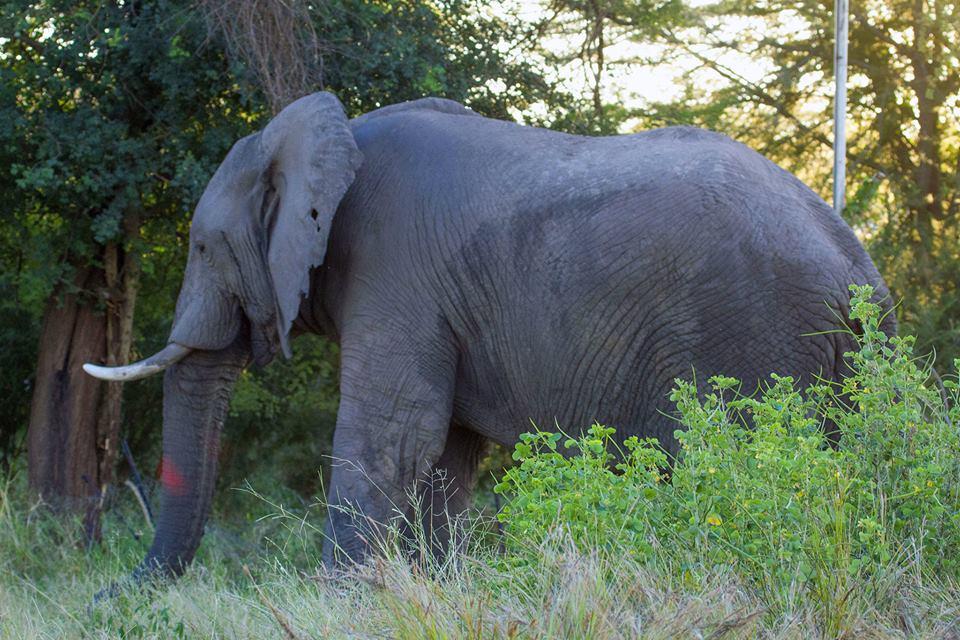 Braconnage d'éléphants: Il faut renforcer la coopération sud-sud (Ali Bongo)