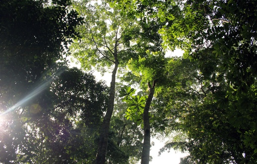 515x330_arboretum-raponda-walker-nord-libreville-gabon.jpg.