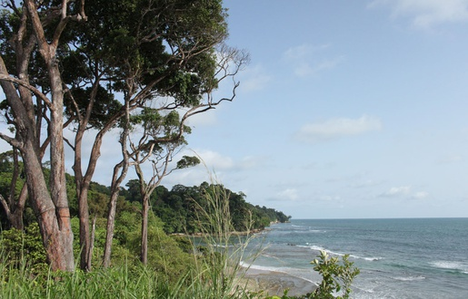 Gabon: Le deuxième poumon de la planète peut-il encore être sauvé?
