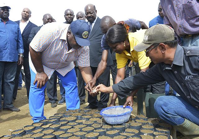 Ali Bongo Ondimba a aussi semé sa graine dans la pépinière @ DCP
