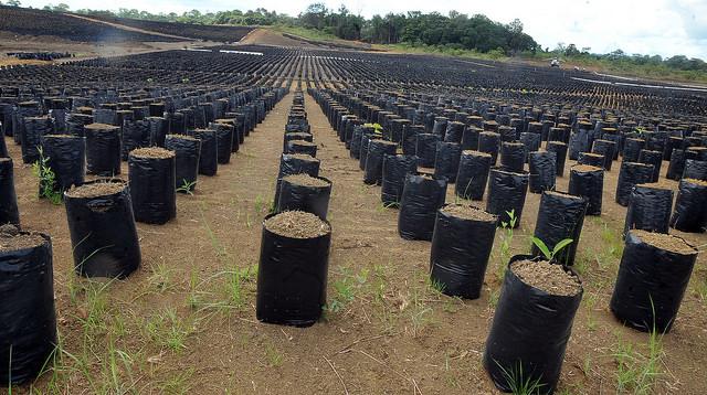 50 coopératives pour semer les « Graines » à Mouila