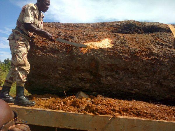 La chefferie de l'Ogooué Ivindo « décapitée » par un Kevazingo