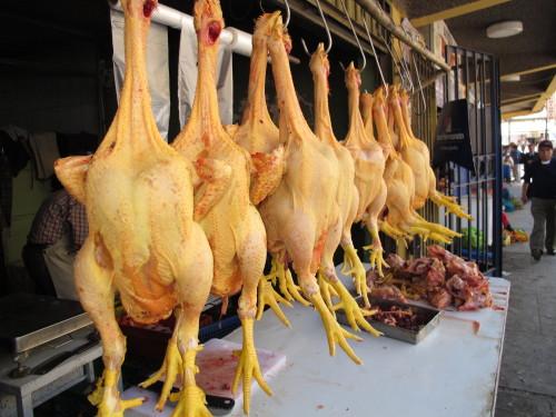 Les indiens vont produire 2 000 à 10 000 tonnes de poulets par mois au Gabon