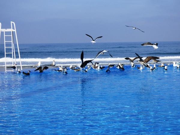 La piscine de l'Amphitrite, ses mouettes et un peu loin l'océan Atlantique @ Gabonactu.com