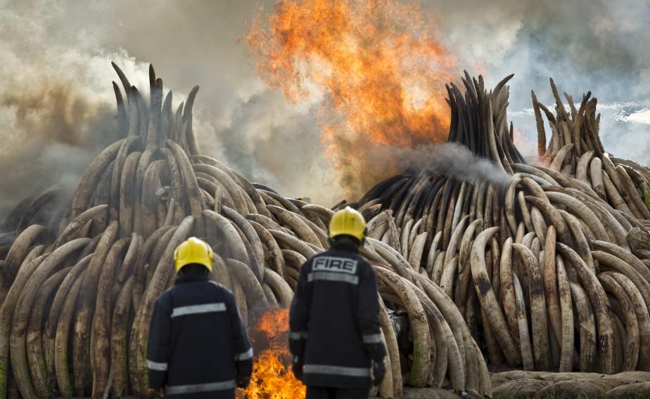 Ali Bongo annonce un plan national de gestion du conflit homme-faune