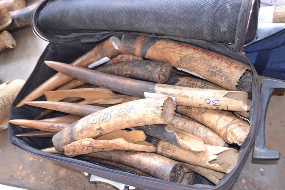 L'ANPN n'est pas complice du trafic de 200 kg de pointes d'ivoire saisies au Cameroun