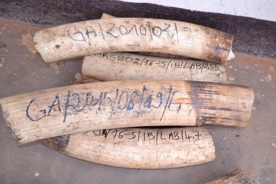 Les numéros d'inventaire retrouvés sur les défenses d'ivoire @ DR