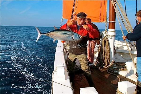 Pêche au thon : le Gabon ne veut plus fermer les yeux face à l'Union européenne