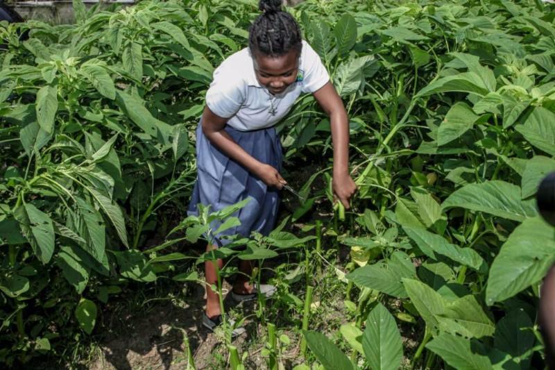 Un «forum» pour faire de l'agriculture le pétrole de demain au Gabon