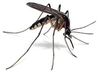 KAF156, un candidat-médicament pour endiguer le paludisme
