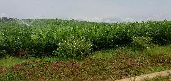 A Mandji Olam devient le maillon fort de l'après pétrole