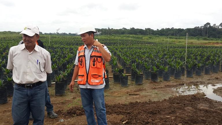 Olam Palm décroche  la certification RSPO, une distinction pour son respect de l'environnement