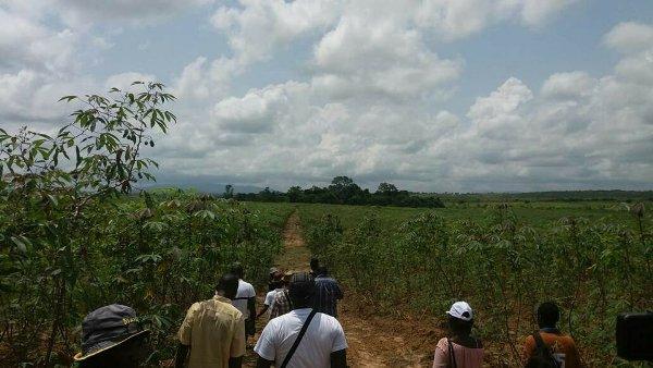 Graine dans la Nyanga :  la récolte démarre dans 2 mois
