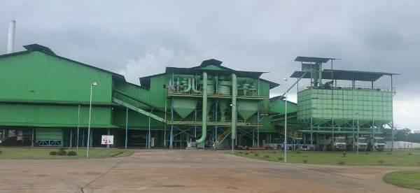 A Mouila Olam produit 540 tonnes d'huile de palme par jour