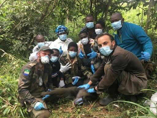 Tourisme: des colliers et harnais GPS et VHF pour aider les touristes à repérer des animaux sauvages dans le parc de la Lopé