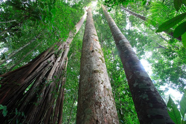 Filière forêt-bois : Remise du 1er Certificat de Conformité du Schéma de Certification Forestière PAFC-Gabon le 4 avril prochain