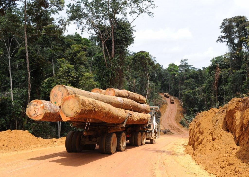 La justice française maintient le suspense sur l'avenir de Rougier SA, coupeur de bois tropicaux