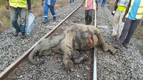Trois éléphants tués dans une collision avec le train voyageur