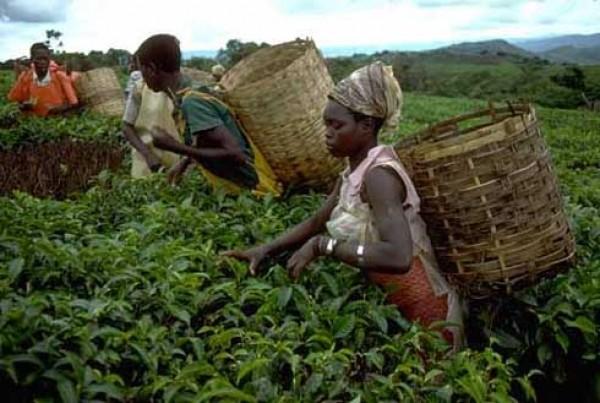 Lutte contre la faim et la pauvreté en Afrique : la FAO et l'UA misent sur l'emploi des jeunes dans l'agriculture