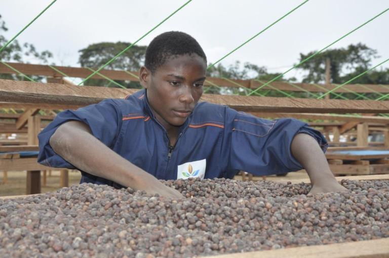 La CAISTAB lance le 1er café 100% Robusta Made in Gabon