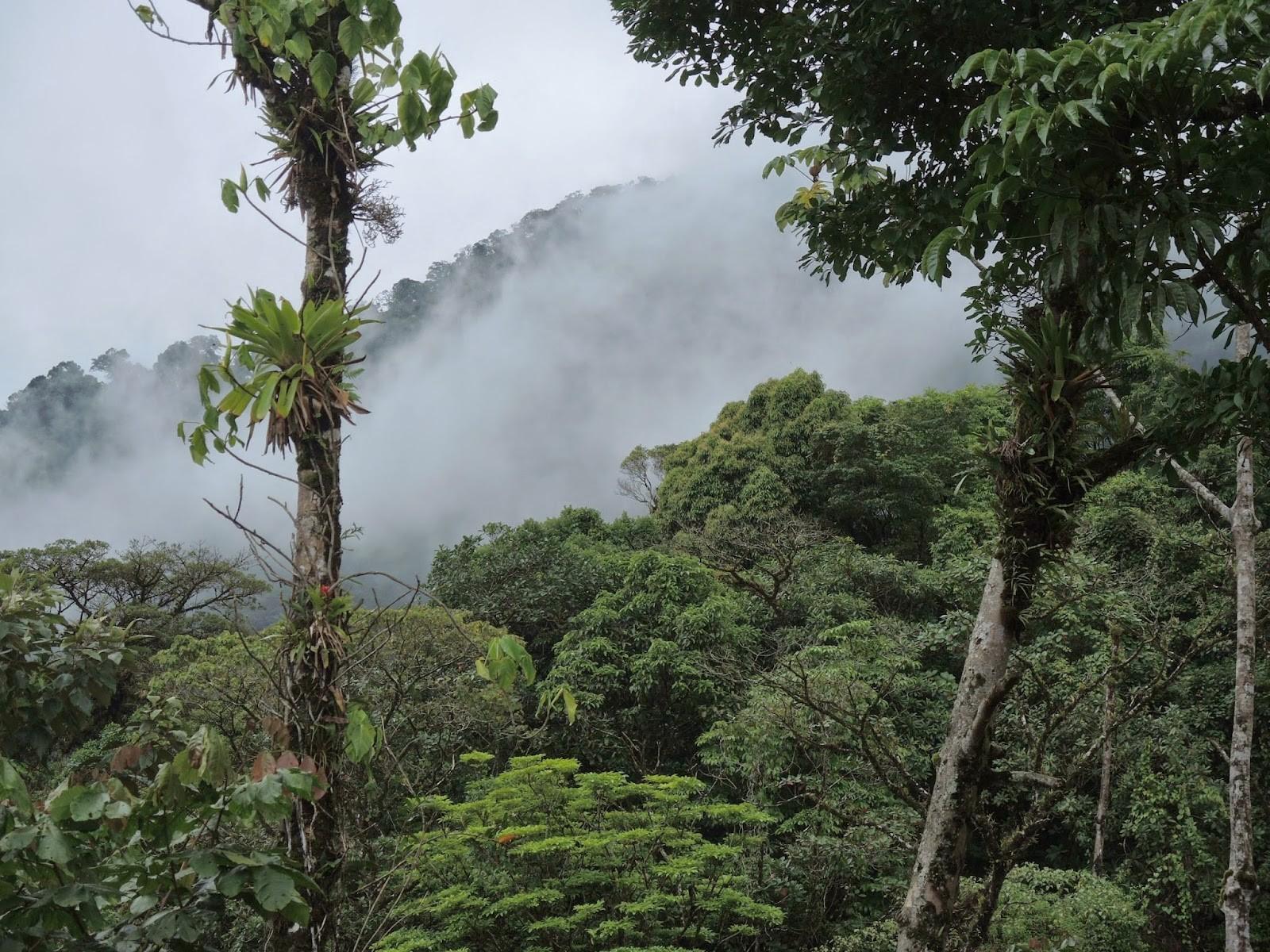 COP 24: la BAD résolue à poursuivre la lutte contre le changement climatique en Afrique