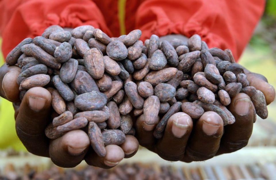 Les pays africains pauvres en matières premières connaîtront une croissance d'environ 5% en 2019 (FMI)