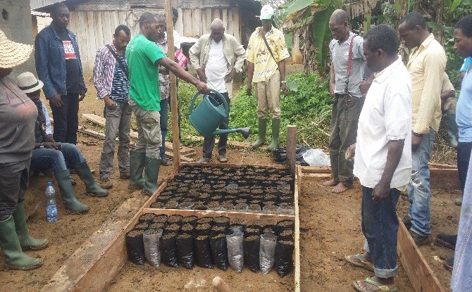 Dynamisation de la filière cacao dans le Woleu-Ntem :  Olam et Brainforest s'associent pour l'essor des communautés rurales