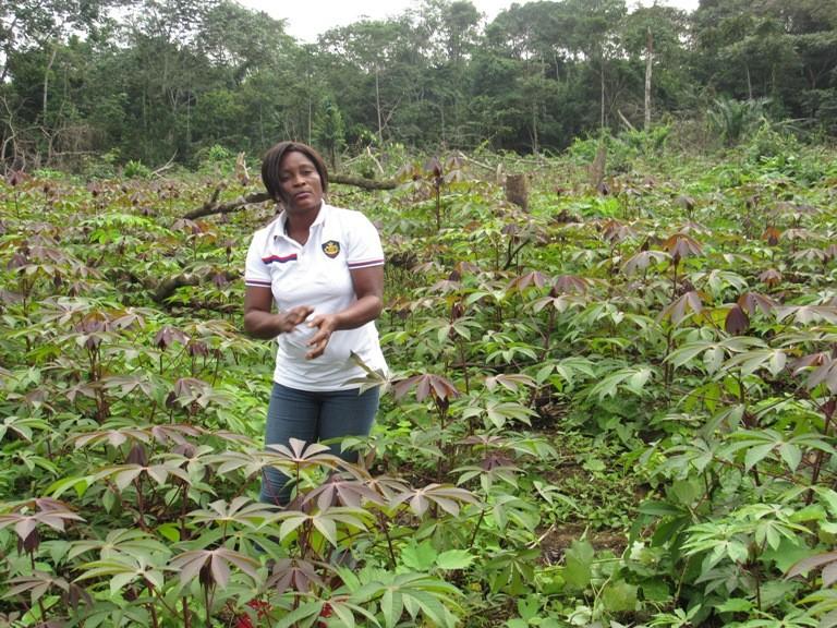 Gabon : 30 hectares de manioc et de banane  à Mbigou pour contribuer à l'autosuffisance alimentaire