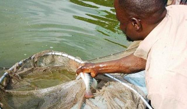 Secteur Pêche: un cahier des charges pour mieux réguler l'activité des pêcheurs